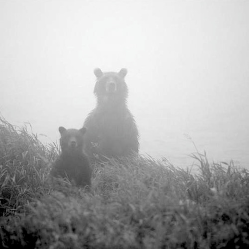 GrizzlyMix - RoadToRussia