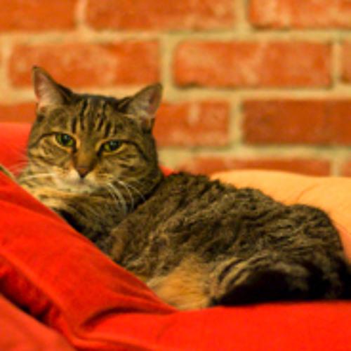 Adventure Cat (featuring Motu)