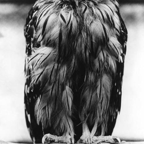 Craft - Owls Dance podcast (COCO FM Miami) - Twice as Proper National Underground (NYC) Nov 9 2012