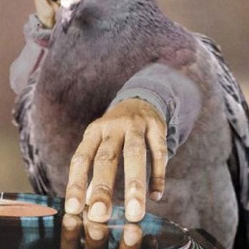 Gravid Fugl (også dævva den)