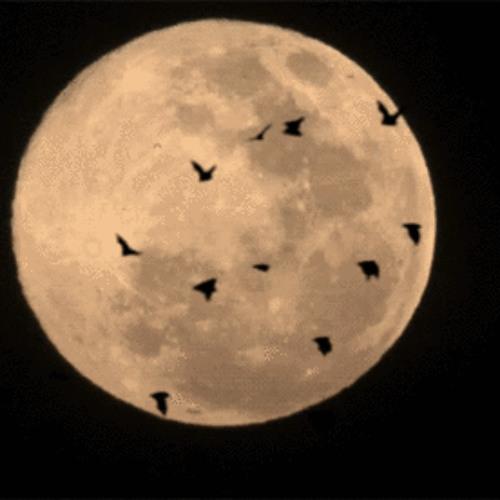 Antonio Giordano - Moonlight [Snippet]