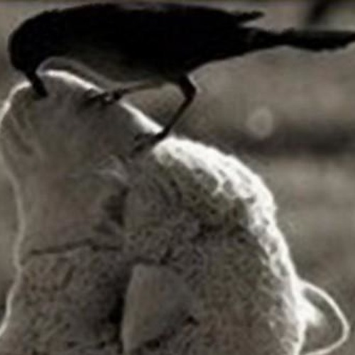 Corbeaux VS Moutons