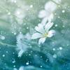 Download Hoa tuyết - Park Hyo Shin Mp3