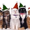 A Very Kitty Christmas - Sleigh Ride
