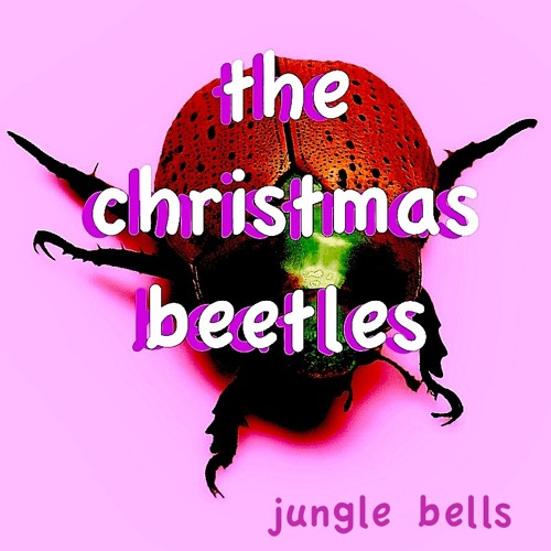 Jungle Balls by the Christmas  Beetles