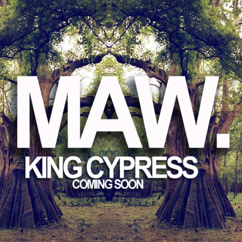 MAW  - Gingko [King Cypress]