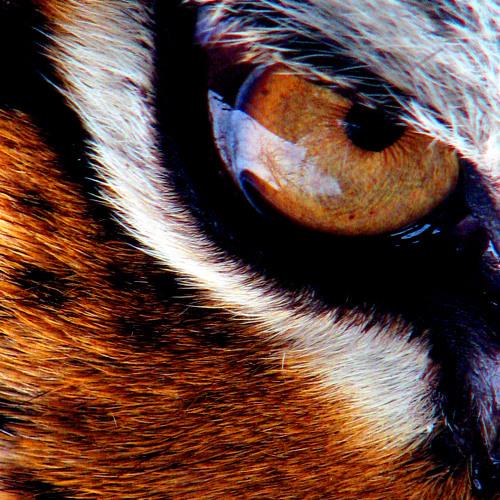 Survivor - Eye of the Tiger (Mojo Filter Volkers Mixdown)