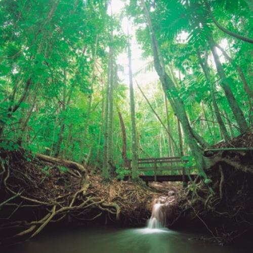 Rainforest Ft. Shaggy