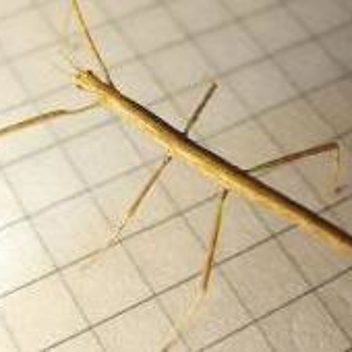 I Was Looking At Mom's Dead Stick Insect And Then It Spoke To Me