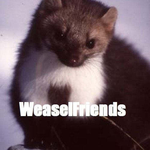 A sweet from the WeaselFriends