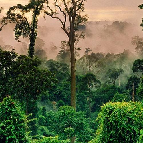UPGRADE - THE CONGO (Forthcoming Liondub)
