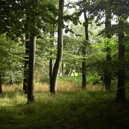 I Skovens Dybe Stille Ro