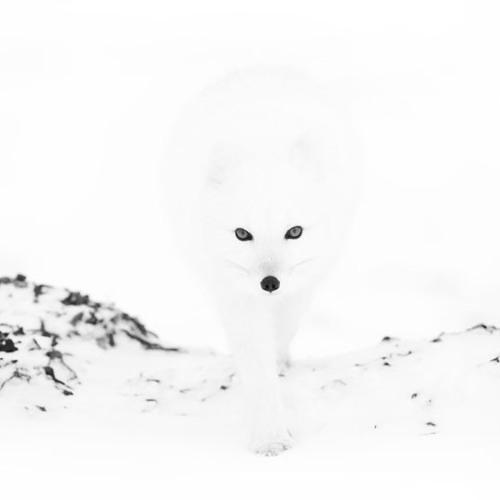 atish - [030] - december 2012 - dark white