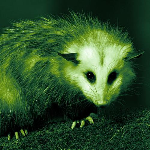 Ein Opossum im Handgepäck