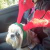 "Christmas Present ""Doreen's Song"""