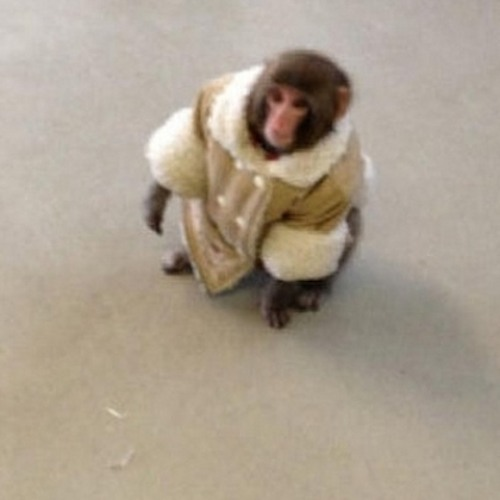 Cutie IKEA monkey has Jeff thinking THIS ...