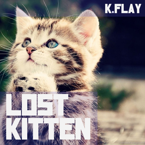 LOST KITTEN (metric cover)