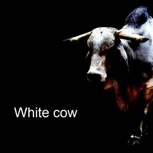 Space Needle - White cow