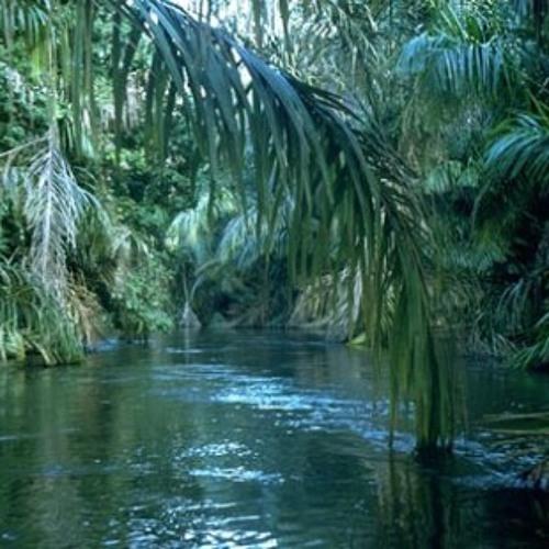 BigA-The Jungle(The Fucking Jungle)