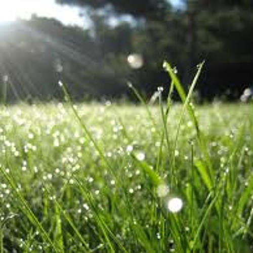 MORNING DEW (HAIKU)