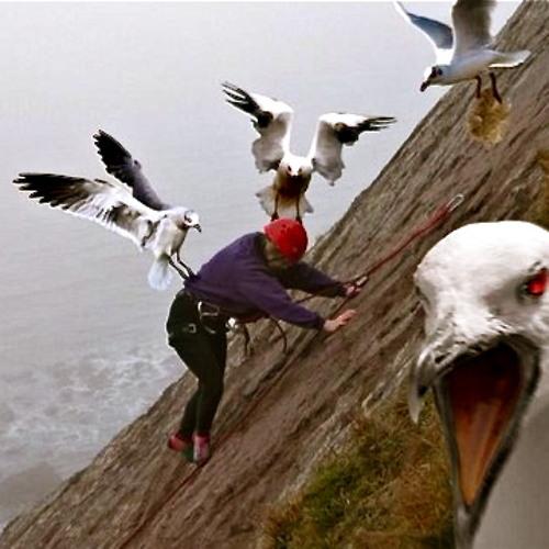Killing Birds