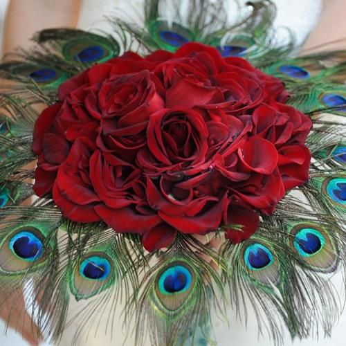 Peacock Rose Pt.1 Sweet and Sensual