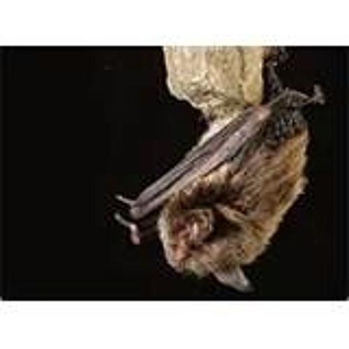 Bats In The Belfry'