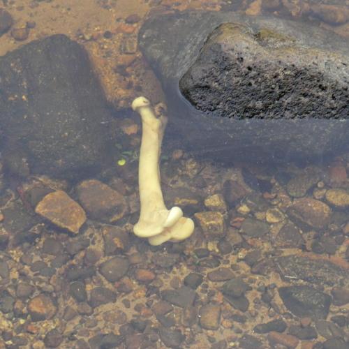 Bone in the Water