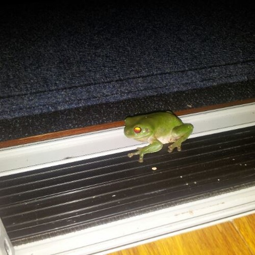 Frogs And Crickets