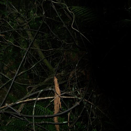 Field Recording Set #20 - Stewart Island, forest, 4AM