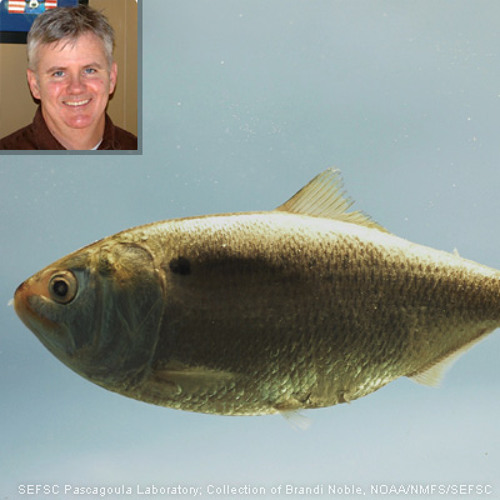 2012-12-28 Regulators Vote to Protect Important Fish
