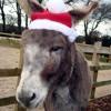 Little Donkey 16bit