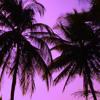 KOKOMO (Beach boys' cover) by PAUL WINSLOW