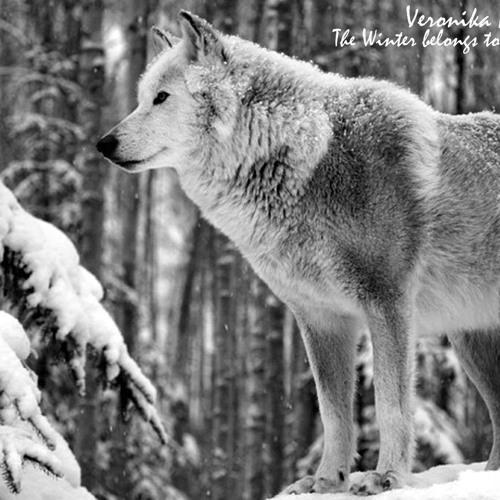Veronika Nikolic - The Winter belongs to the Wolves//FREE DOWNLOAD