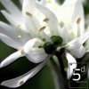 5 and Dime Recordings - White Obsession EP - 5D016 - Out now on Beatport and Traxsource