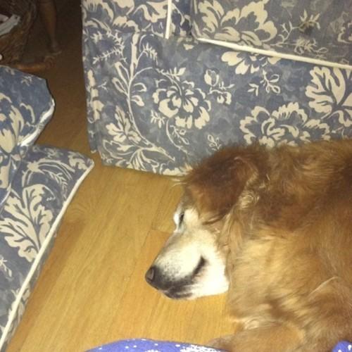 Jessie sleeping