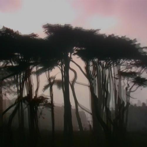 Jane Woodman: Black forest