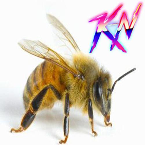 K-N - Bee