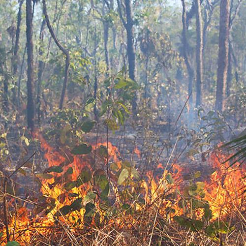 Bushfire in Kakadu, Australia