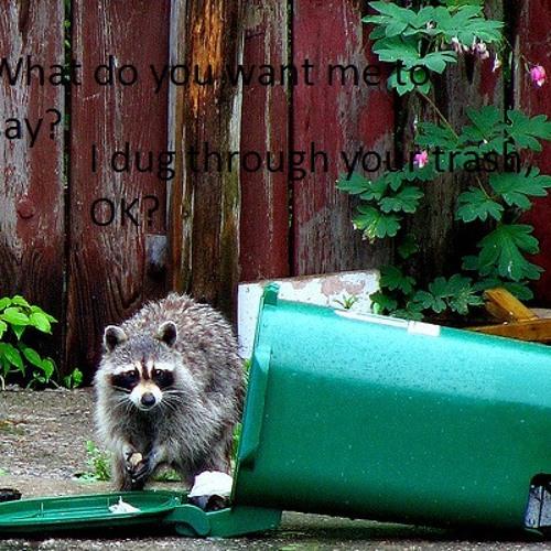 I Dug Through Your Trash, OK?