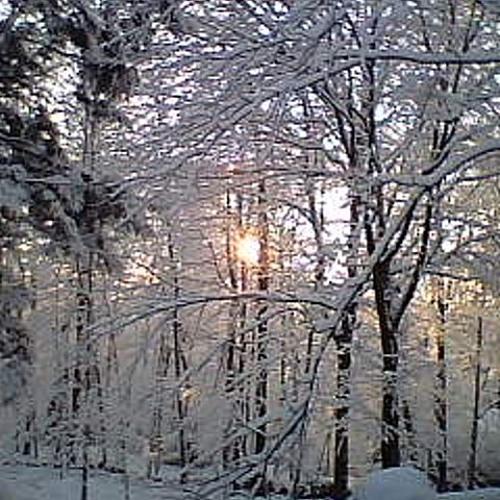 Winter Morning by a Lake (string quartet)