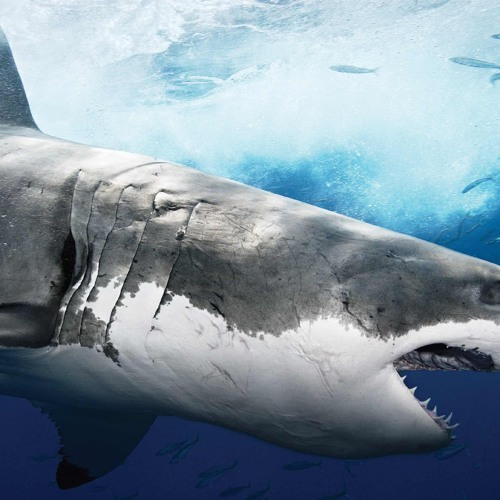 Sharks 'n' Stuff