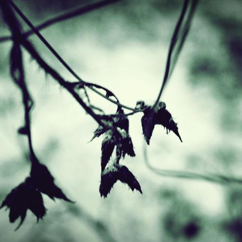 Black Autumn - Untitled