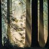 Blamstrain - Sunday Dub EP - 11 PM - BUY VINYL