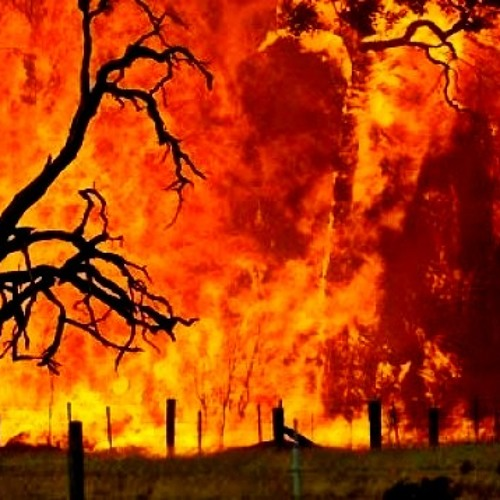 Playazepam - bushfire