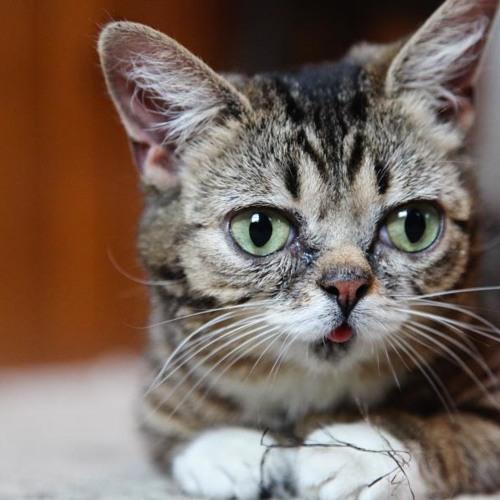 Just A Lil Bub
