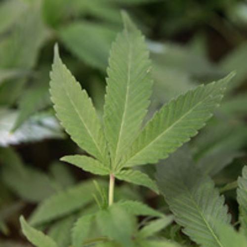 Marijuana politics in NJ, PA & the U.S.