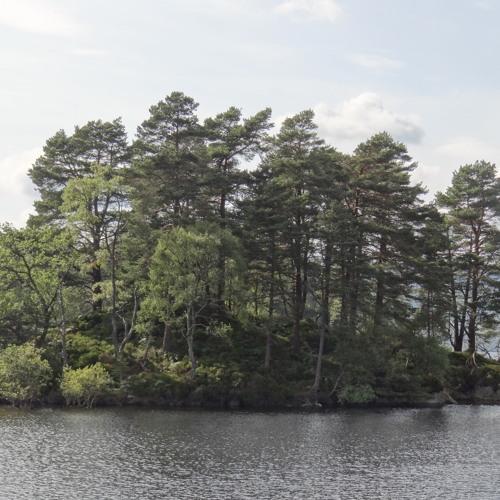 dave stafford - a string of islands... (application: shredder synth)