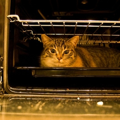 The Cat in My Oven Aint no Biscuit