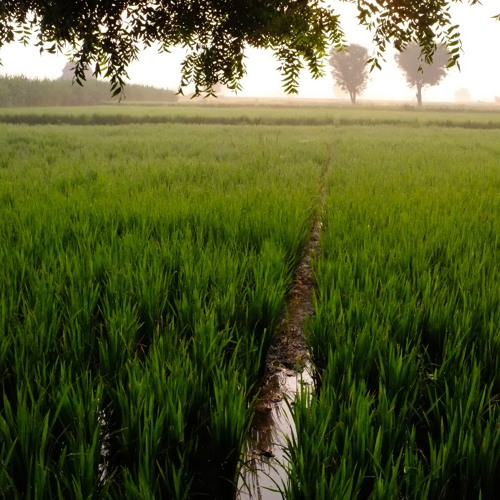 Justice and Agriculture in Andhra Pradesh